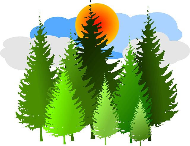green spruce tree group with orange sun and blue clouds